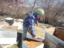 Nicole cleaning the hives, preparing them for the new bees