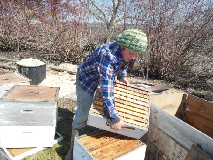 Cleaning hives 2013