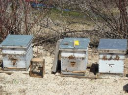 3 Hives 2013