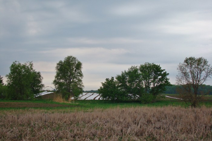 View of the fields from the Road (2)