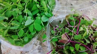 pea-shoots-and-micro-greens